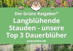 Langblühende Stauden - unsere Top 3 Dauerblüher für den Garten.