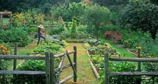 vegetable garden grown-to-be-eaten
